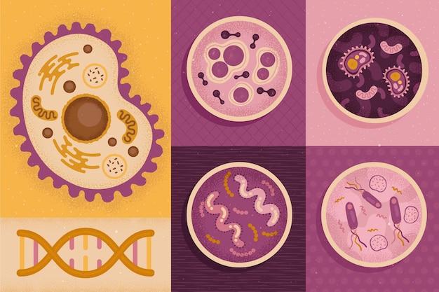 Vari tipi di cellule tornano al concetto di scuola Vettore gratuito