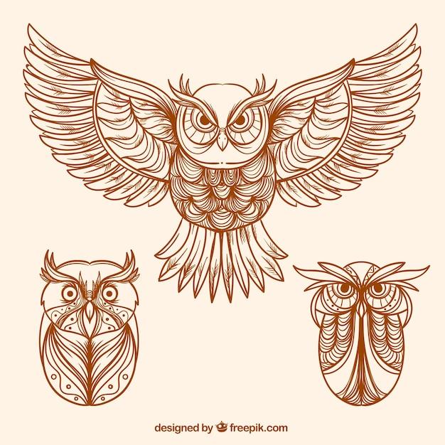 Varie mano disegnato gufi decorativi Vettore gratuito