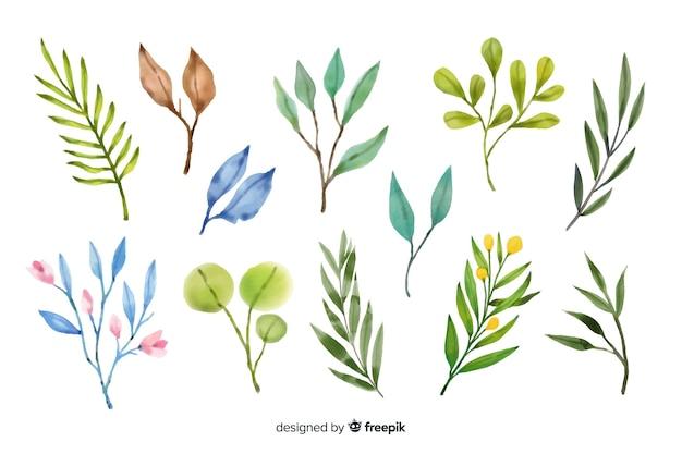 Varietà di foglie colorate su sfondo bianco Vettore gratuito