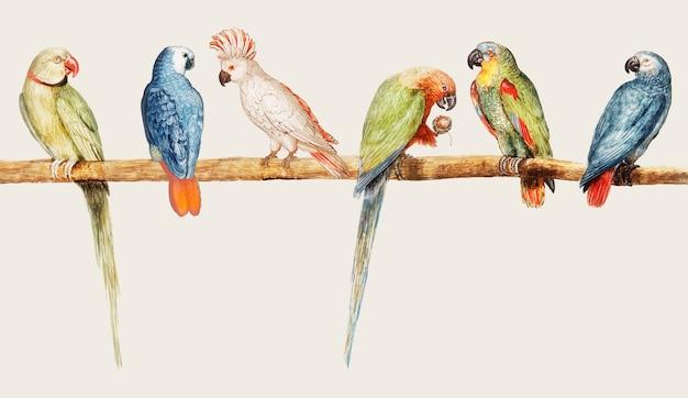 Varietà di pappagalli in stile vintage Vettore gratuito