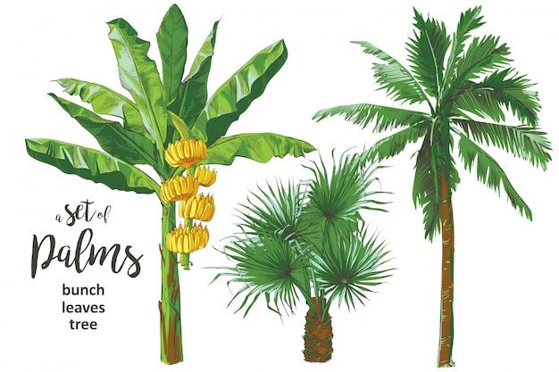 Vector il modello senza cuciture strutturale della palma tropicale delle banane. Vettore Premium