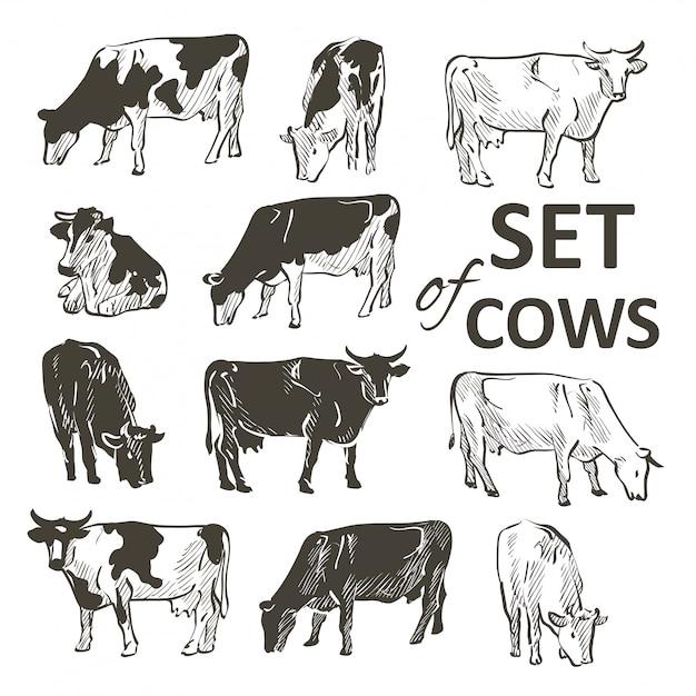 Vector set di mucche Vettore Premium