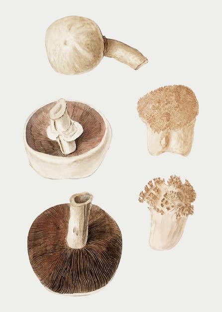 Vettore d'annata dell'illustrazione di varietà del fungo Vettore gratuito
