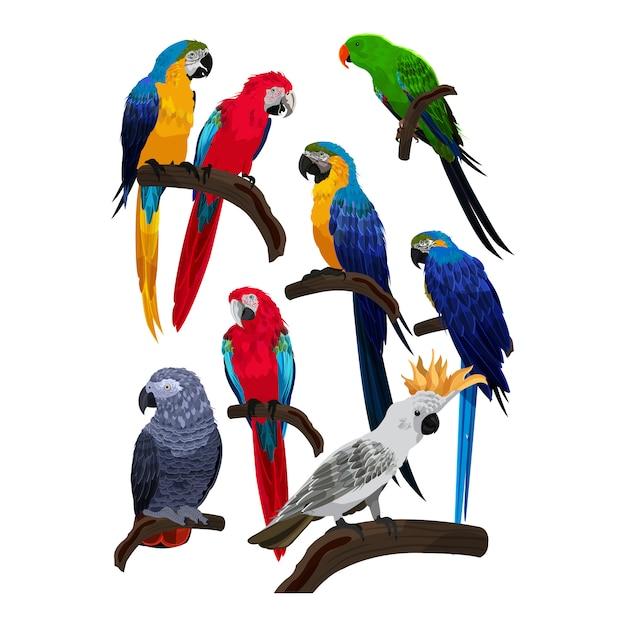 Vettore del modello del pappagallo della raccolta delle specie degli uccelli Vettore Premium