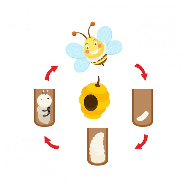 Vettore dell'ape del ciclo di vita dell'illustrazione Vettore Premium