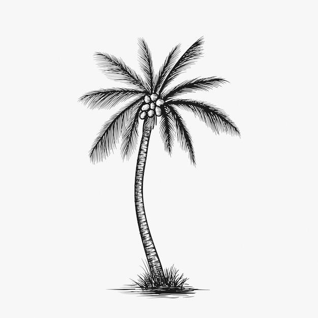 Vettore di albero di cocco disegnato a mano Vettore Premium