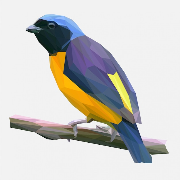 Vettore poligonale dell'uccello tropicale Vettore Premium