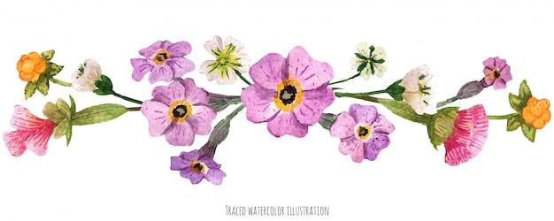 Vignetta dalle piante selvatiche della scozia Vettore Premium