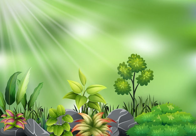 Vista della pianta botanica sulla luce del sole Vettore Premium