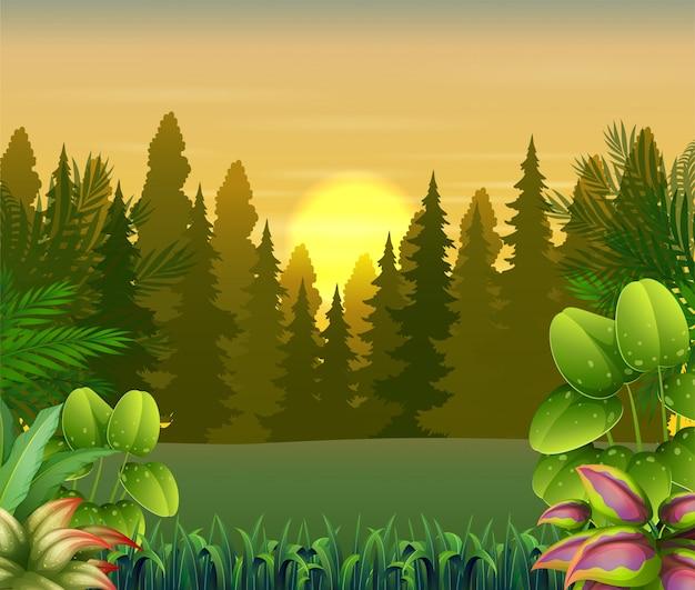 Vista delle piante e degli alberi all'illustrazione di tramonto Vettore Premium