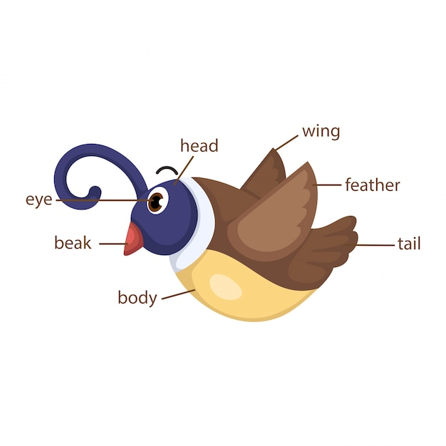 Vocabolario di uccelli parte del vettore del corpo Vettore Premium