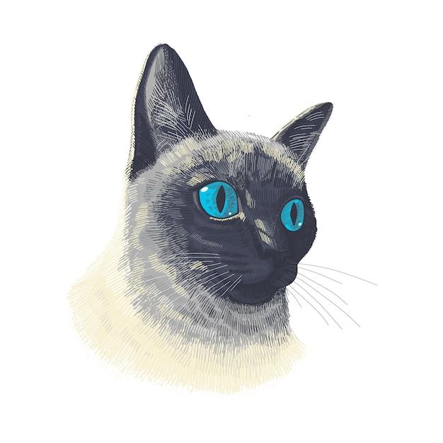 Volto Animale Gatto Siamese Ritratto Di Testa Di Gatto Vettoriale