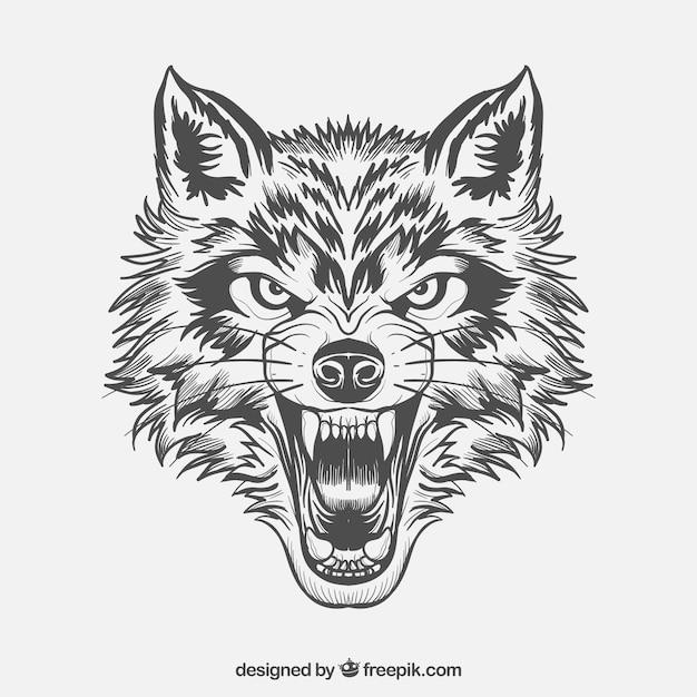 Volto feroce del lupo Vettore gratuito