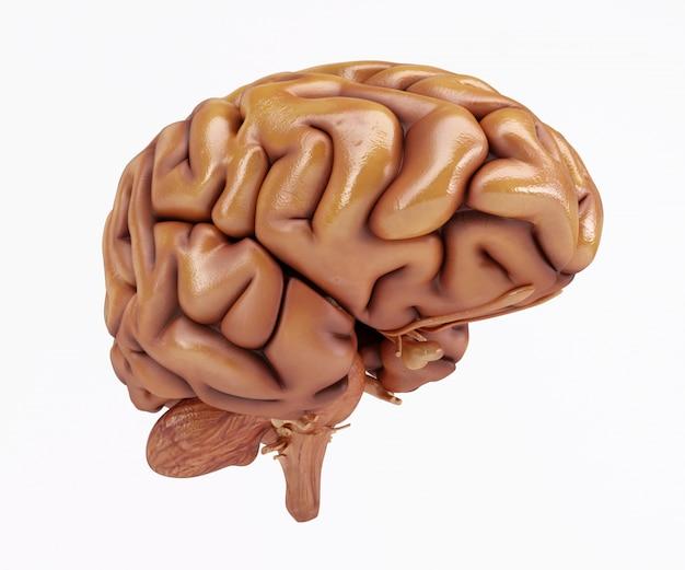 3d hersenen Gratis Foto
