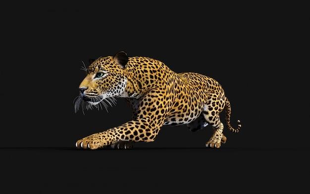 3d illustratie van geïsoleerde luipaard op zwarte achtergrond Premium Foto