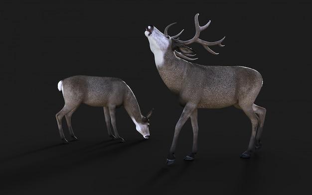 3d illustratie van het wild van muilezelherten in het amerikaanse westen isoleert op zwarte achtergrond met het knippen van weg Premium Foto
