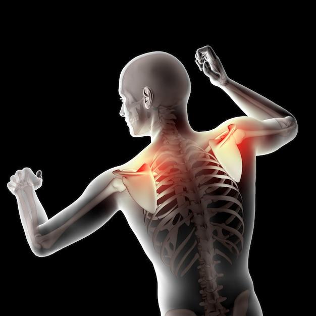 3d mannelijke medische figuur met schouderbladen gemarkeerd Gratis Foto