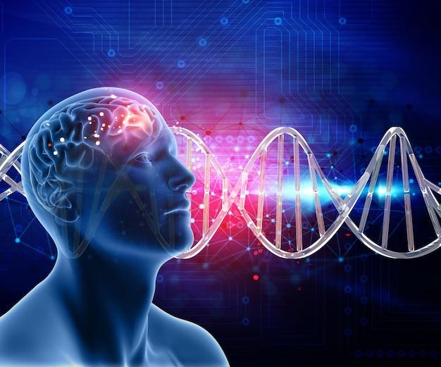 3d medische achtergrond met mannelijke kop en hersenen op dna strengen Gratis Foto