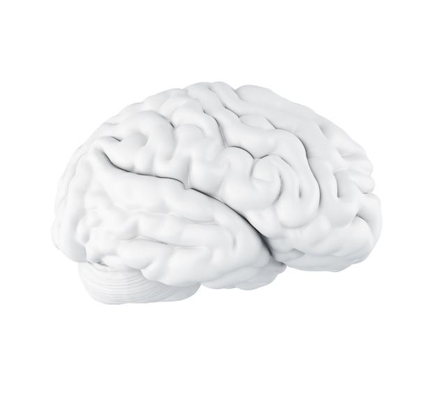 3d menselijk brein. Premium Foto