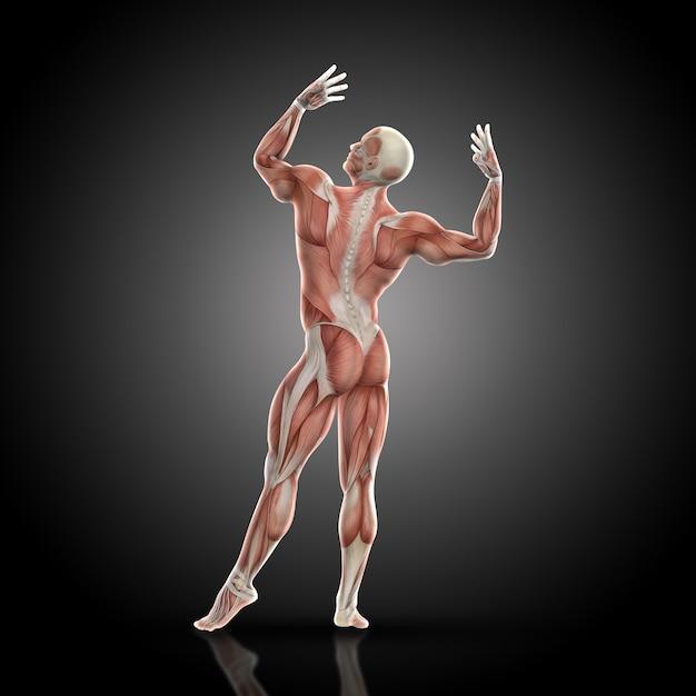3d render van een medische figuur bodybuilder met spierkaart in een bodybuilding pose achteraanzicht Gratis Foto