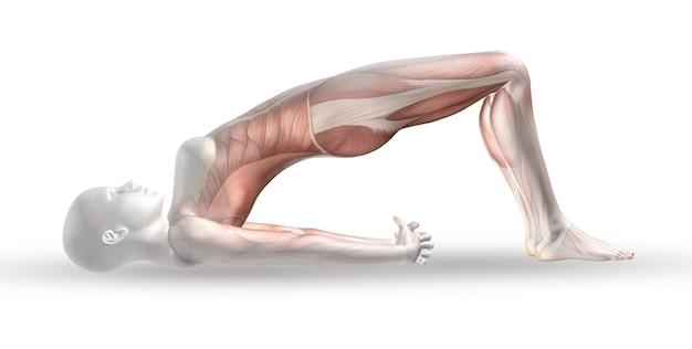 3d vrouwelijk medisch cijfer met spierkaart in yogapositie Gratis Foto