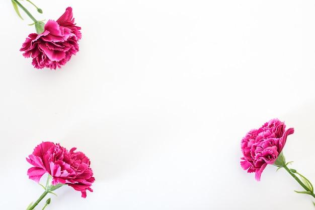 8 maart vrouwendag anjer Premium Foto