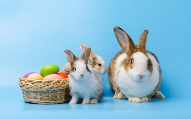 Aanbiddelijk moederkonijn met twee babykonijnen die naast kleurrijke paaseieren in mand zitten Premium Foto
