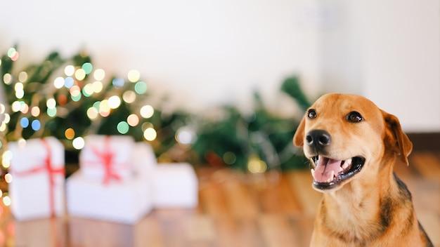 Aanbiddelijke hond die met giften kerstmis thuis viert. Premium Foto