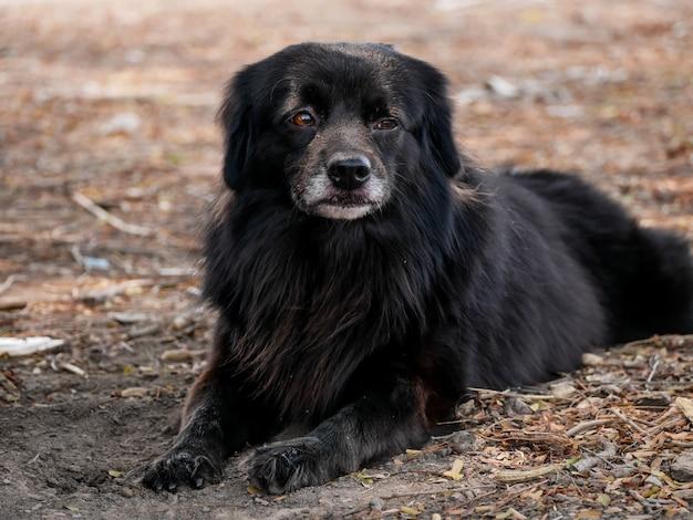 Aanbiddelijke zwarte hond die op de grond ligt Premium Foto