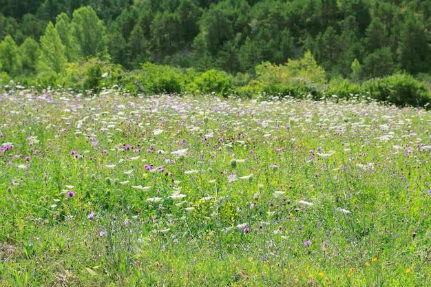 Aard van de het gebieds de openluchtlente van de bloemenweide Premium Foto
