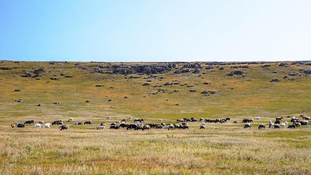 Aard van moldavië, vlakte met schaarse vegetatie, meerdere rotsen en grazende geiten Gratis Foto