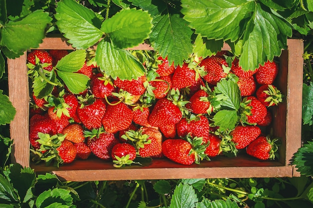 Aardbeienhuis vanuit de tuin. selectieve aandacht. Premium Foto