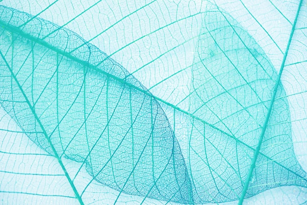 Abstract blauw groen blad textuur achtergrond Premium Foto