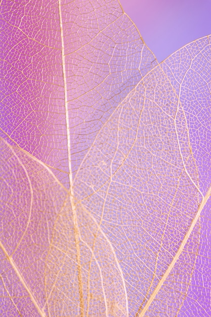 Abstract mooi transparant purper blad Gratis Foto