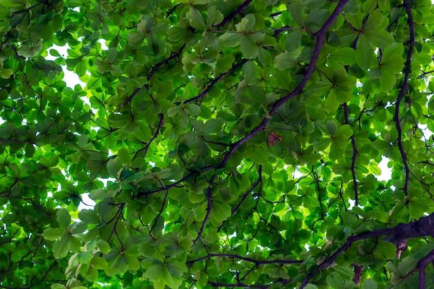 Abstracte achtergrond van groen blad en tak in zonnige dag in de tuin. Premium Foto