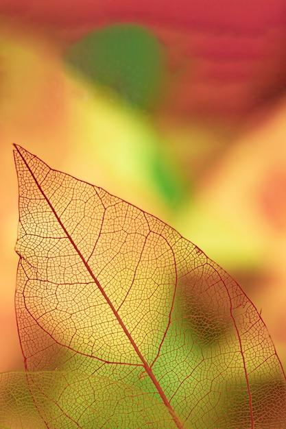 Abstracte bladaders met geel Gratis Foto