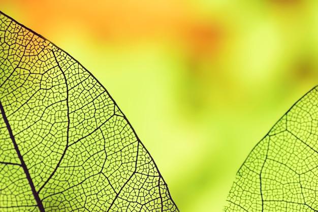 Abstracte bladeren met groene achtergrondverlichting Gratis Foto