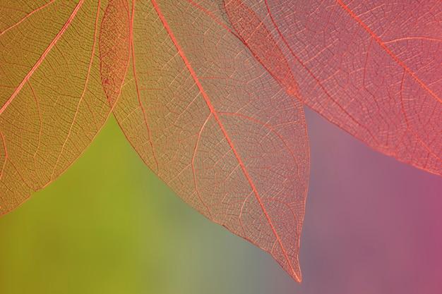 Abstracte rood gekleurde herfstbladeren Gratis Foto