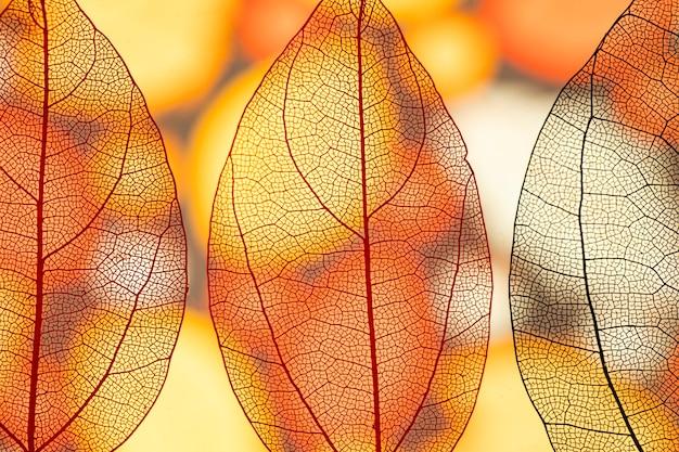 Abstracte transparante oranje herfstbladeren Gratis Foto
