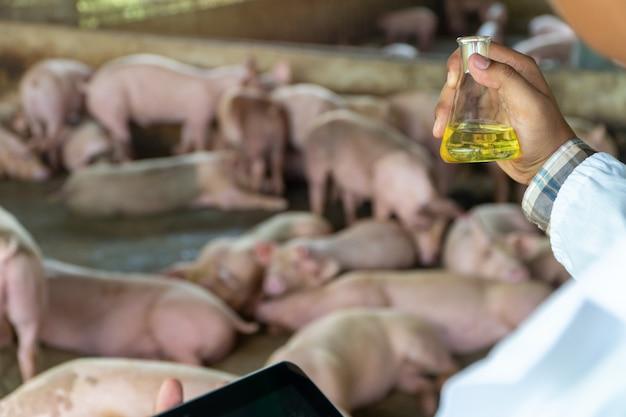 Achteraanzicht van dierenarts arts die een beschermend pak draagt en een erlenmeyer-fles vasthoudt voor het controleren van mond- en klauwzeer in de varkenshouderij. Premium Foto
