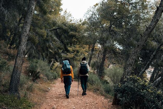 Achteraanzicht van een wandelaar die op sleep in het bos loopt Gratis Foto