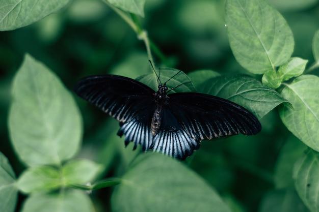 Achteraanzicht van een zwarte en blauwe vlinder op bladeren Gratis Foto