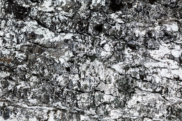Achtergrond van de close-up de houten textuur Gratis Foto