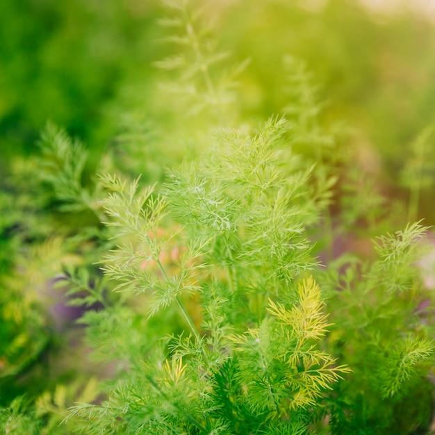 Achtergrond van de lente groene installatie Gratis Foto