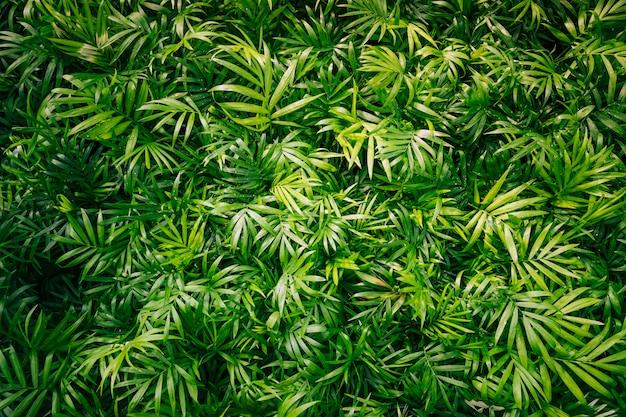 Achtergrond van de lenteinstallatie met groene bladeren Gratis Foto