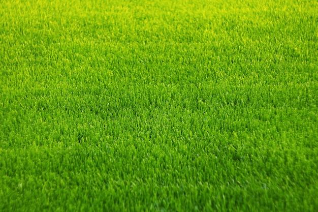 Achtergrond van groen gras. geweldige gras textuur. Premium Foto
