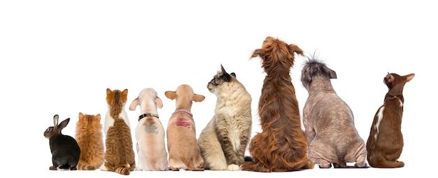 Achtermening van een groep huisdieren, honden, katten, konijn, zitting, die op wit wordt geïsoleerd Premium Foto