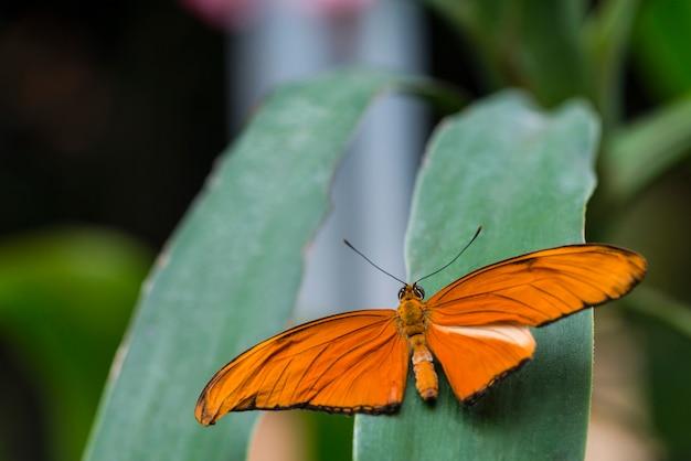 Achtermenings oranje vlinder op blad Gratis Foto