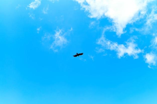 Adelaars voeren. troep van adelaars die in de lucht cirkelen wachtend op voedsel. Premium Foto