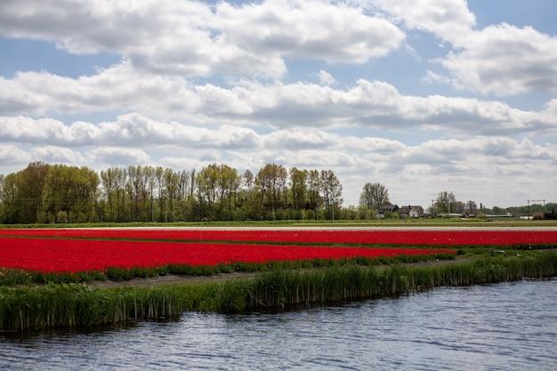 Adembenemend landschap van een veld vol betoverende tulpen in nederland Gratis Foto